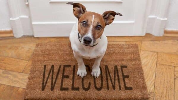 Como prepararse para adoptar un perro