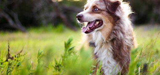 dia internacional del perro