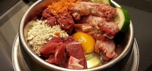 Dieta Barf Perros